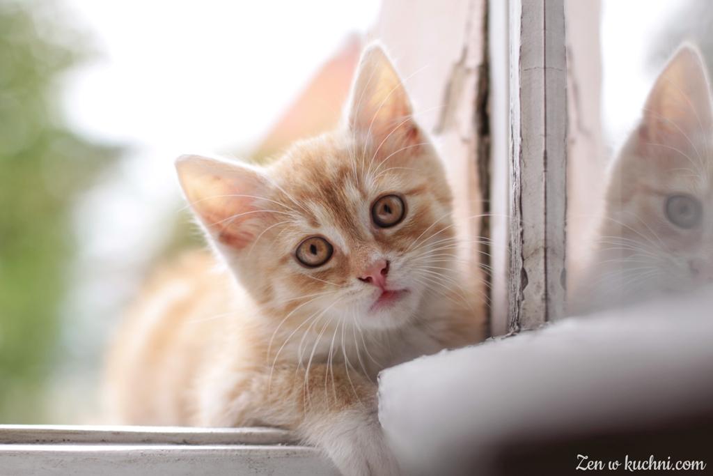 poradnik dla właścicieli kotów