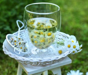 herbata ze stokrotki