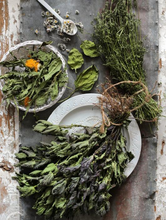 wiosenne zioła z natury